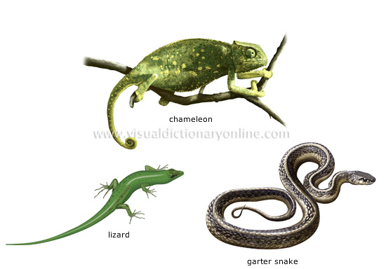 Reptile Information and Gallery