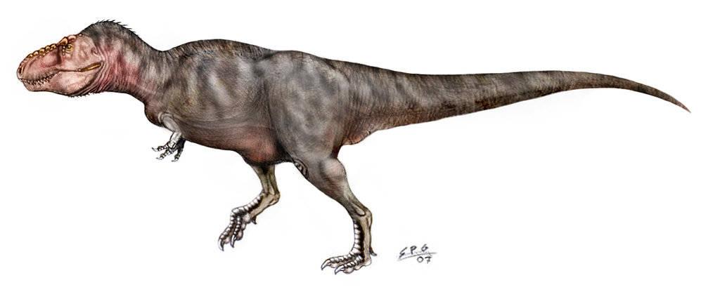 Velociraptor Quick Facts tyrannosaurus - d&#233...